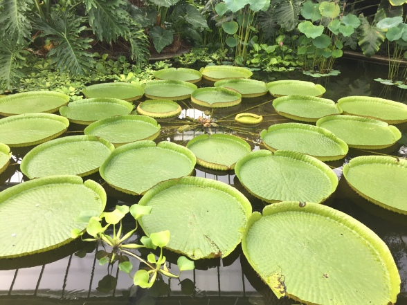 Lily pond in the Princess of Wales Conservatory