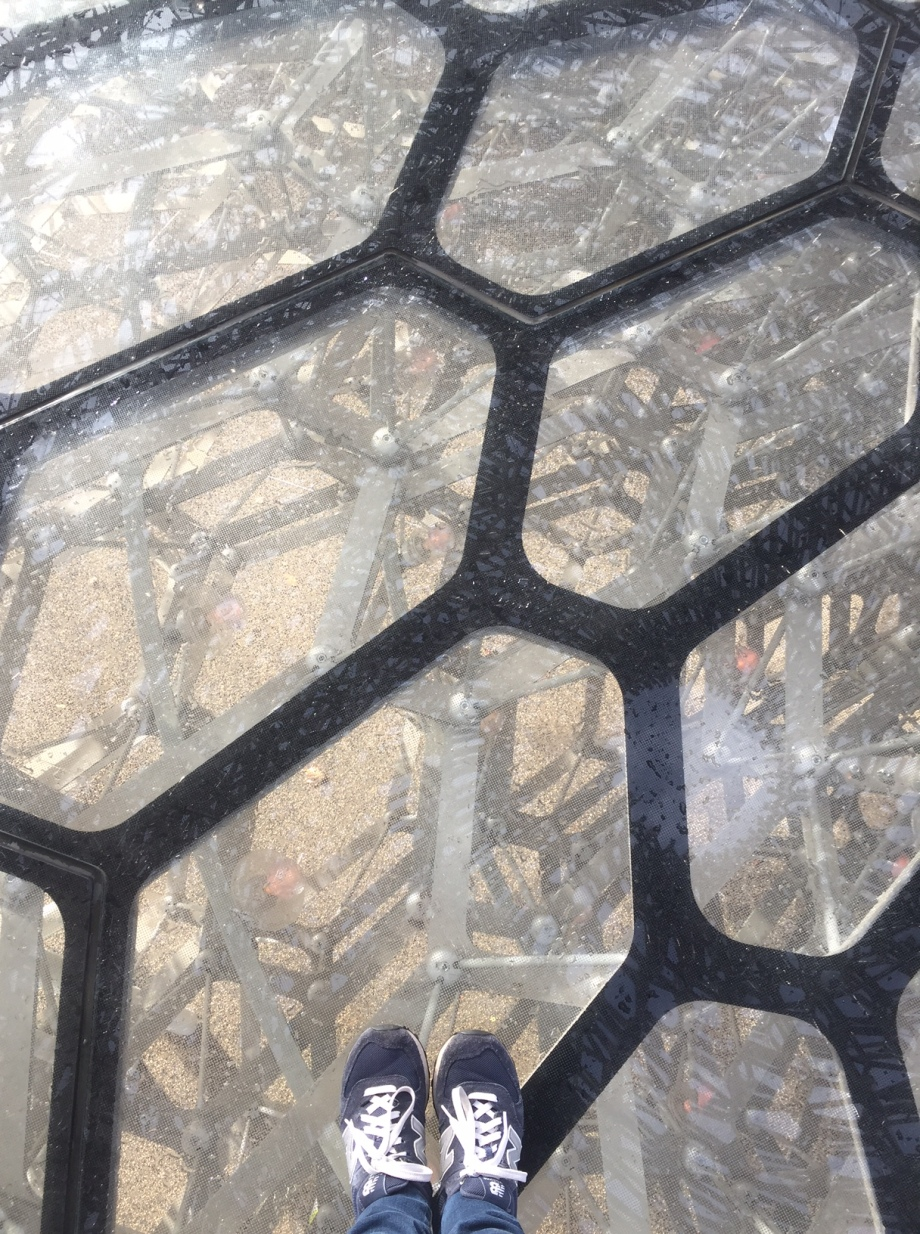 The Hive at Kew Gardens, from inside looking down. #ihavethisthingwithfloors!