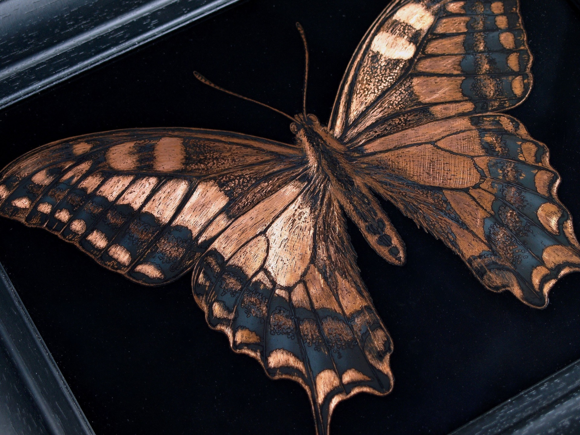 AMT.18.07.001.-Swallowtail-butterfly 5