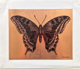 AMT.18.07.001. Swallowtail butterfly. Drawing on copper plate