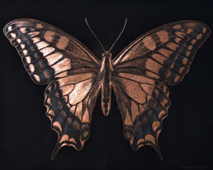 AMT.18.07.001. Swallowtail butterfly