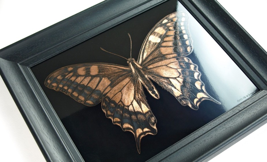Swallowtail butterfly commission. A case study.