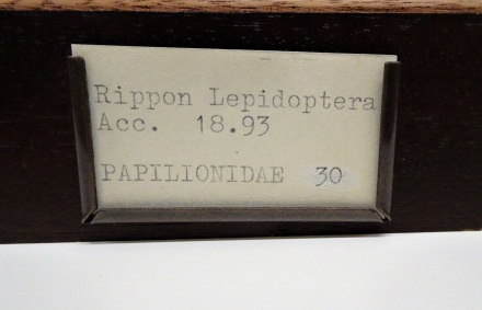 Butterfly drawer label, from the National Museum Cardiff Entomology collections