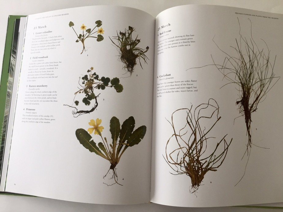 A Year in the Life of an English Meadow, photographs of pressed plants